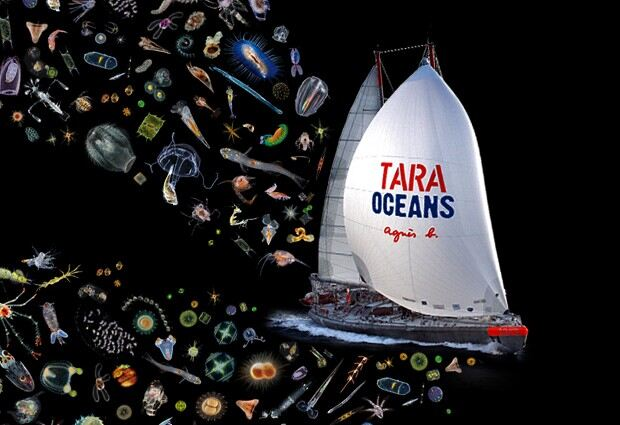 composite image of plankton and Tara Oceans boat