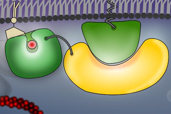 cellular process model